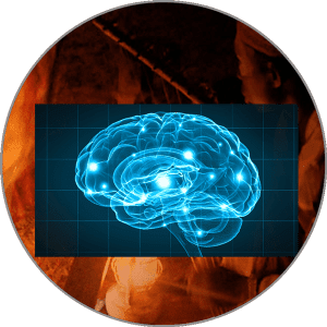 ibogaine and the Brain